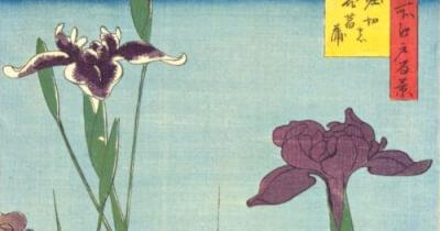 『花菖蒲』 和風・浮世絵風イラスト 描き方 Kenji Iwasaki 岩崎健児