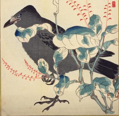 『カラス』 和風・浮世絵風イラスト 描き方 Kenji Iwasaki 岩崎健児