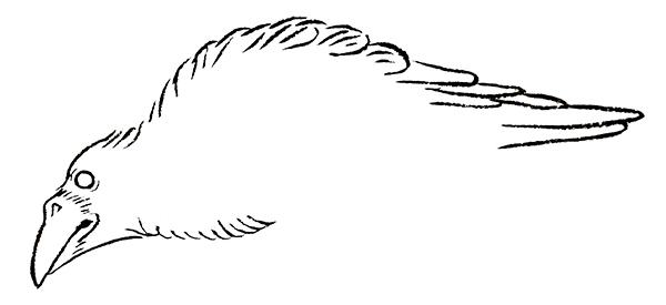 ※品種や固体によって異なる場合もあります カラス 和風・浮世絵風イラスト 描き方 Kenji Iwasaki 岩崎健児