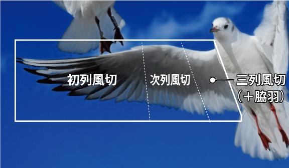 カラス 和風・浮世絵風イラスト 描き方 Kenji Iwasaki 岩崎健児